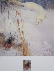 Ermine and Mouse