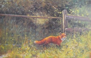 Red Fox and Gate